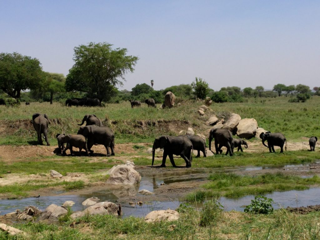 Photo Journal: Tanzania Safari in 7 Days - Tarangire National Park