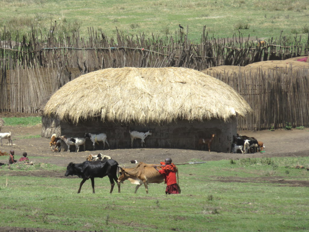 Fun Things To Do in Moshi, Tanzania - Ngorongoro Conservation Area Massai Village