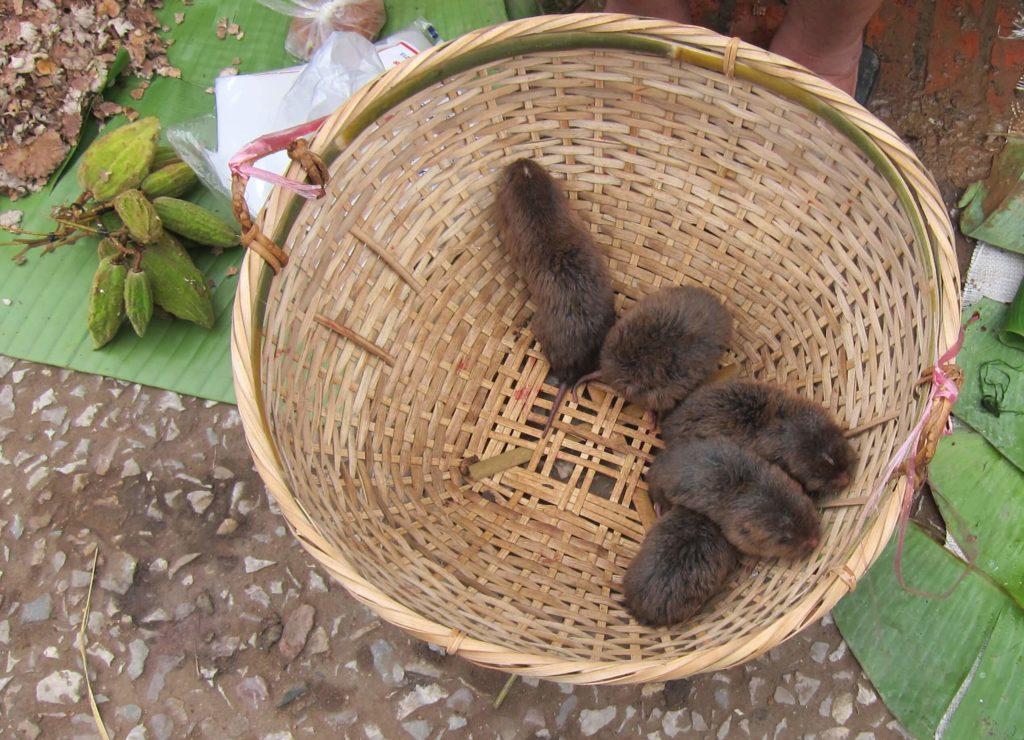 Top 8 Reasons To Visit Luang Prabang, Laos Now - Morning Market Bamboo Rat