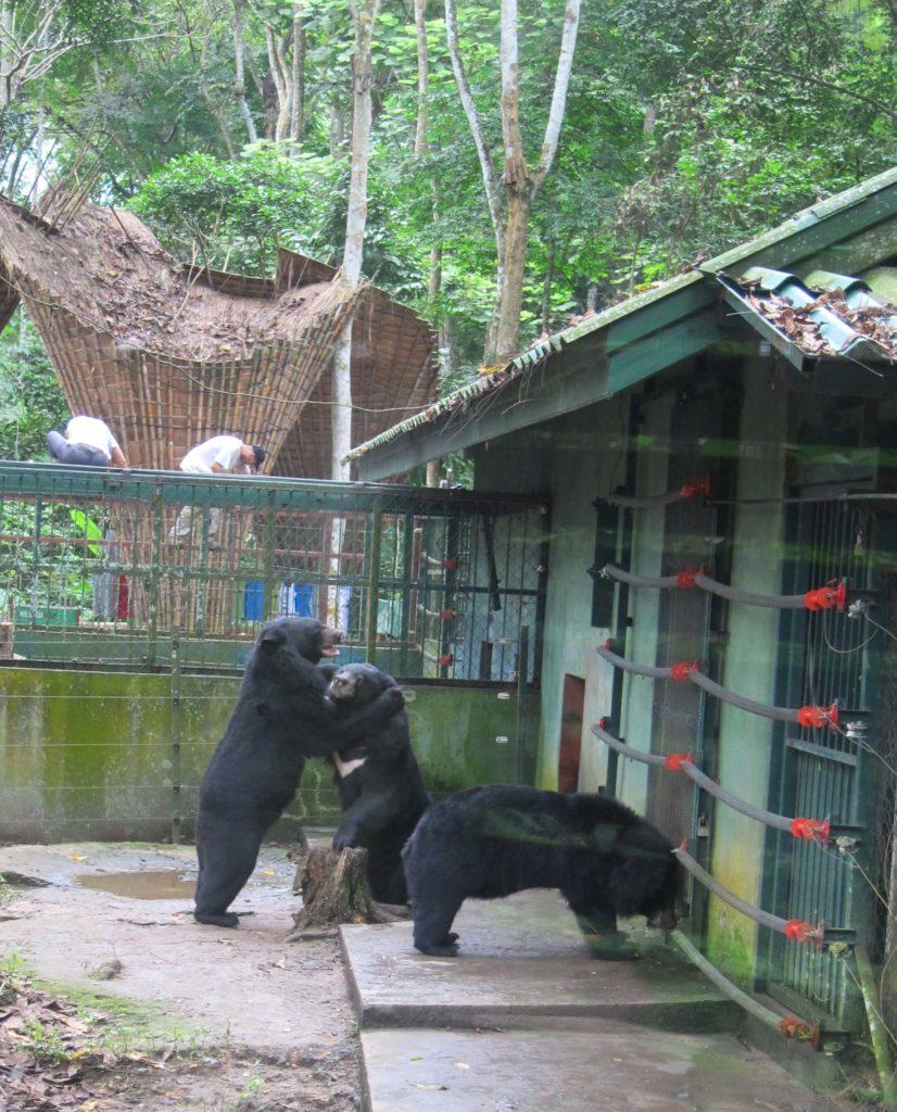 Top 8 Reasons To Visit Luang Prabang, Laos Now - Bear Rescue Center
