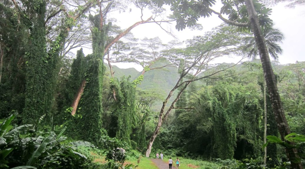 Oahu, Hawaii Manoa Falls Trails