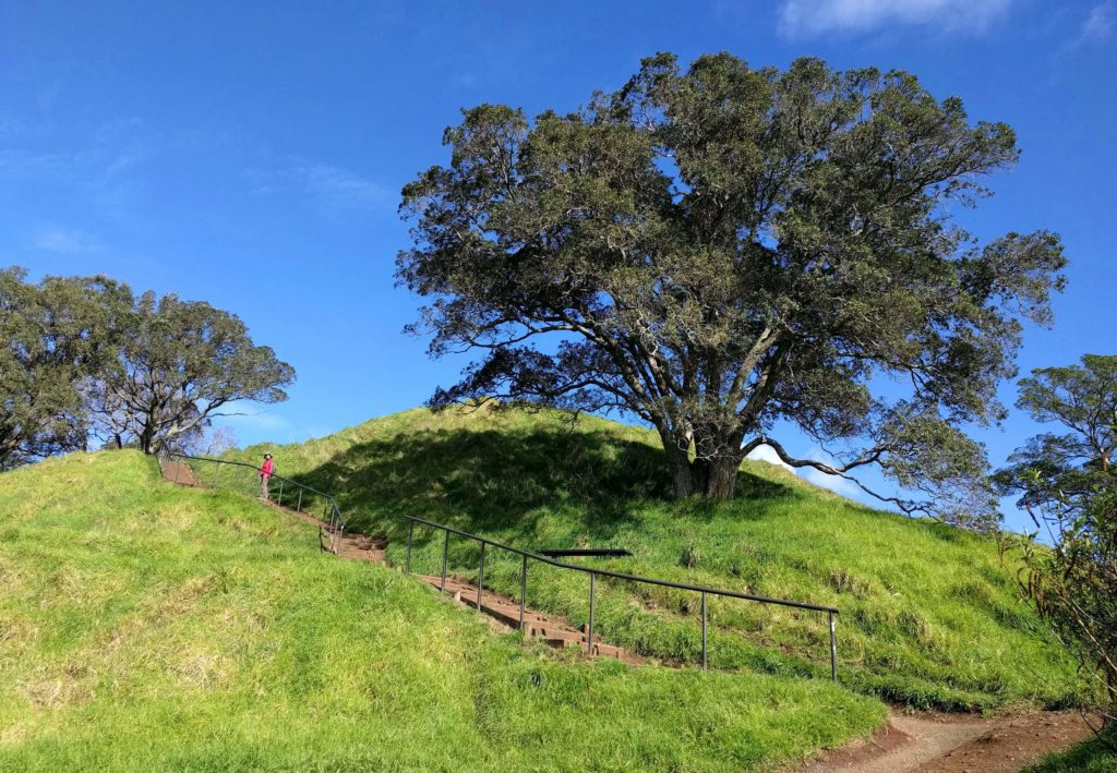 Spending One Beautiful Day in Auckland, New Zealand - Mount Eden Hillside
