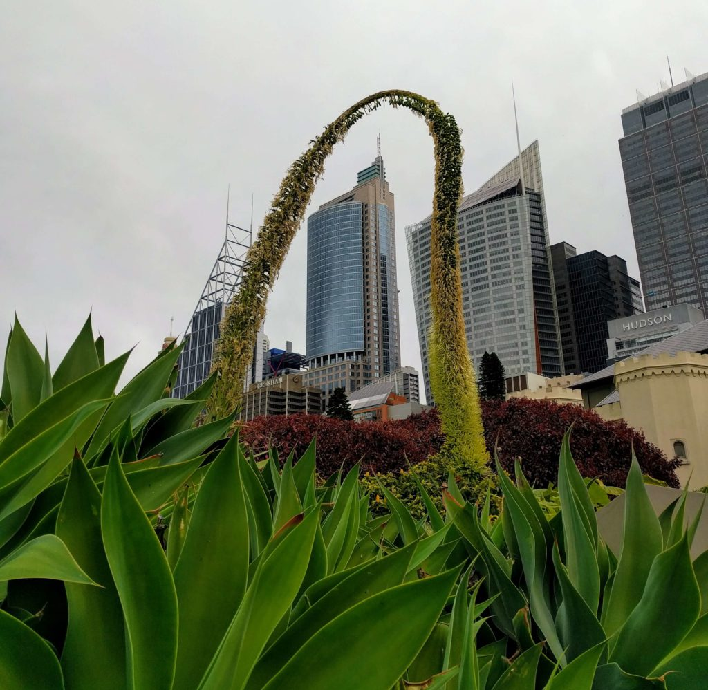 How To Explore Sydney During A 12 Hour Layover - Royal Botanic Gardens Hanging Plant