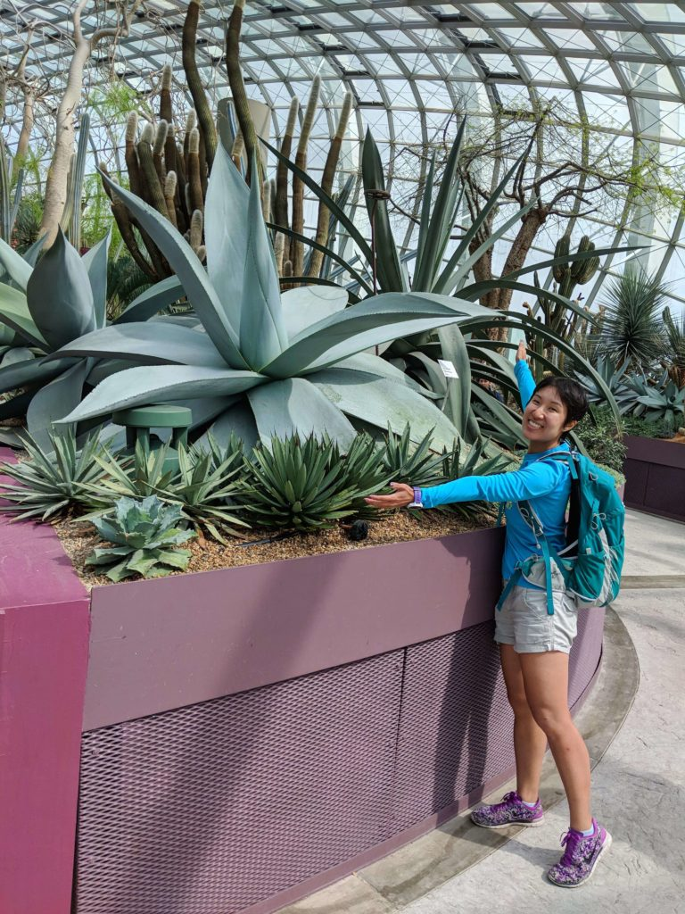 The Gardens By The Bay's Flower Dome has a variety of plants including giant succulents.