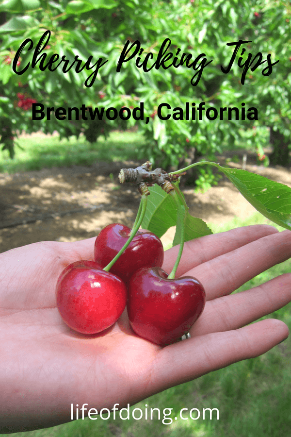 Tips for Cherry Picking, Brentwood, California