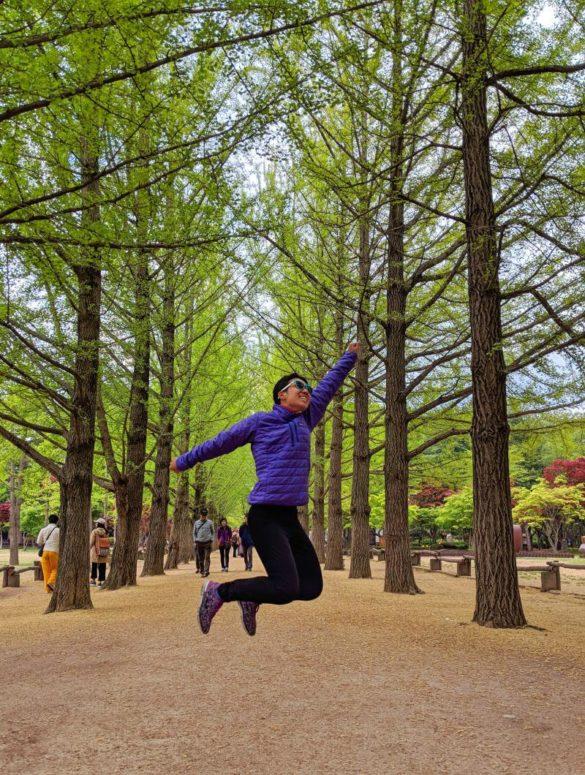 Gingko Tree Lane at Nami Island, Gapyeong, South Korea