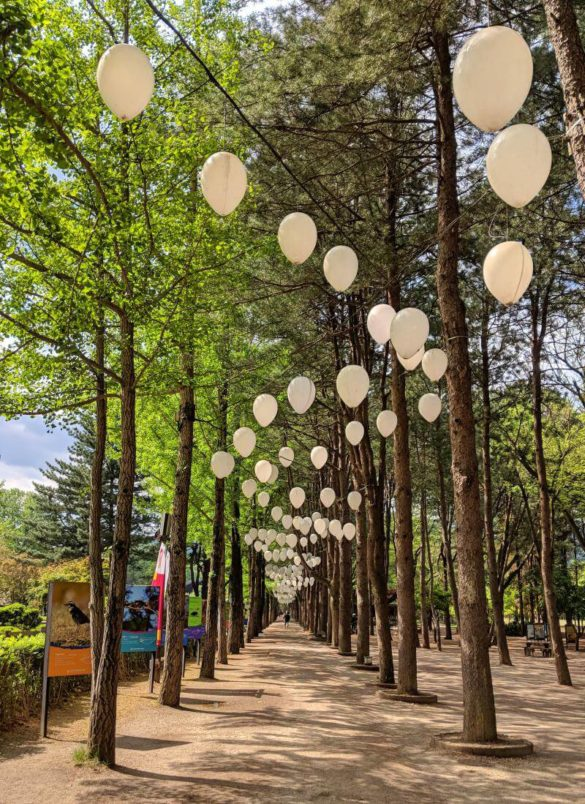 Redwood Trees at Nami Island, Gapyeong, South Korea