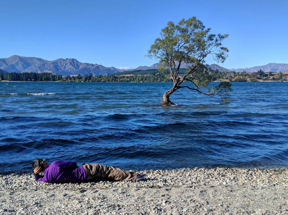how to get to the wanaka tree