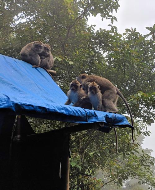 Visit Pura Lempuyang and see monkeys