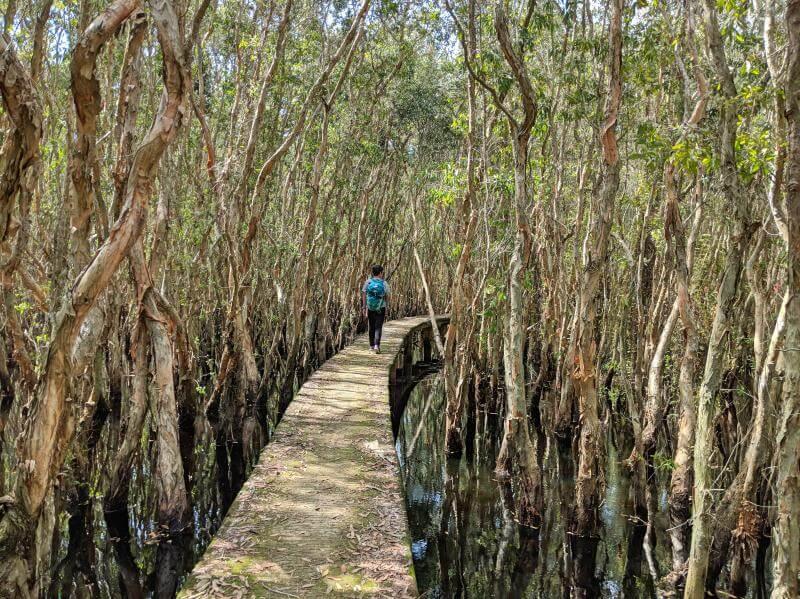 Tan Lap Floating Village, Long An, Vietnam Walk Through Melaleuca Forest