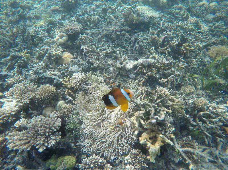 Snorkeling at Kelor Island, Indonesia