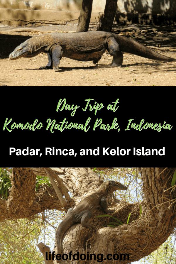 Plan a one day trip to Komodo National Park, Indonesia