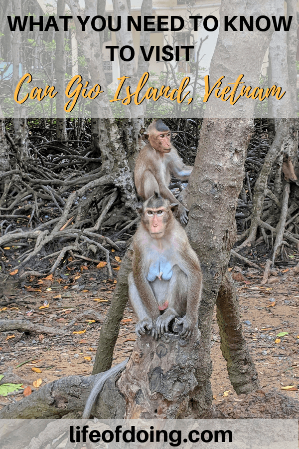 How to Visit Can Gio Island, Vietnam - see Monkey Island, mangroves, and more!