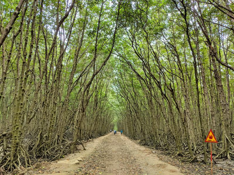 Can Gio Island, Vietnam: Walk through Mangroves