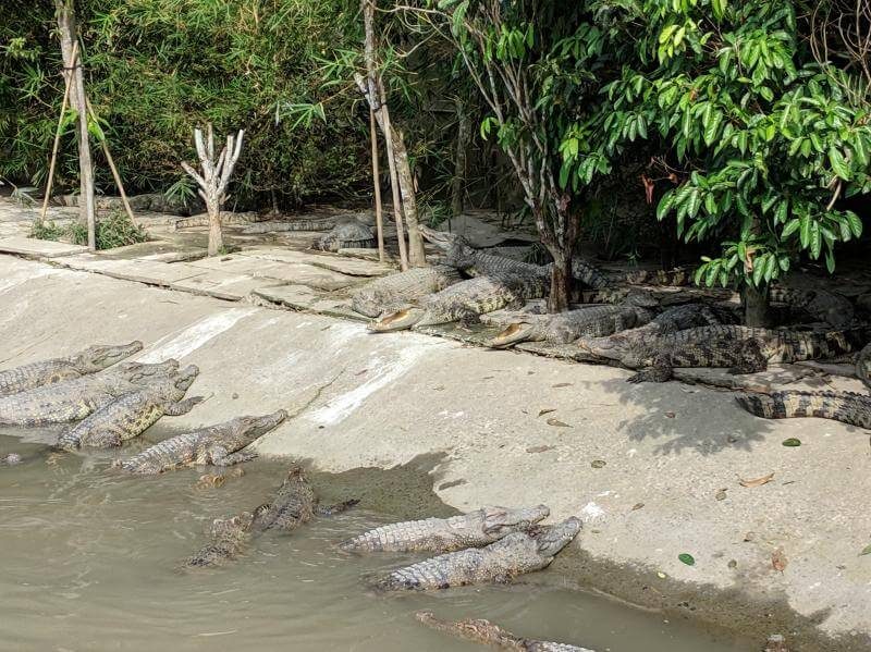 Can Tho, Vietnam: Over 500+ crocodiles at My Khanh Tourist Village