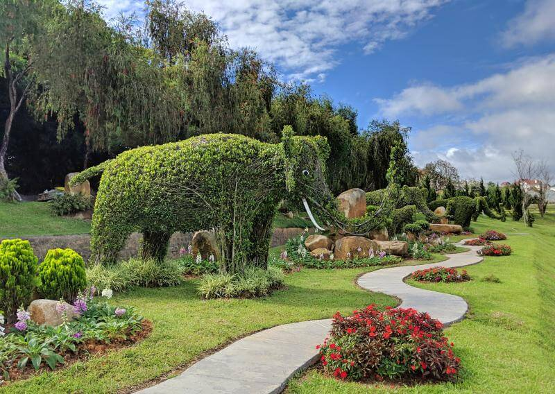Dalat Flower Garden has beautiful topiary in the garden such as elephant shaped bushes