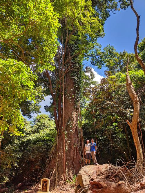Con Dao National Park is well worth the visit and recommended as a top thing to do on Con Dao, Vietnam. You can check out Vietnam's Heritage Tree as it's a huge tree!