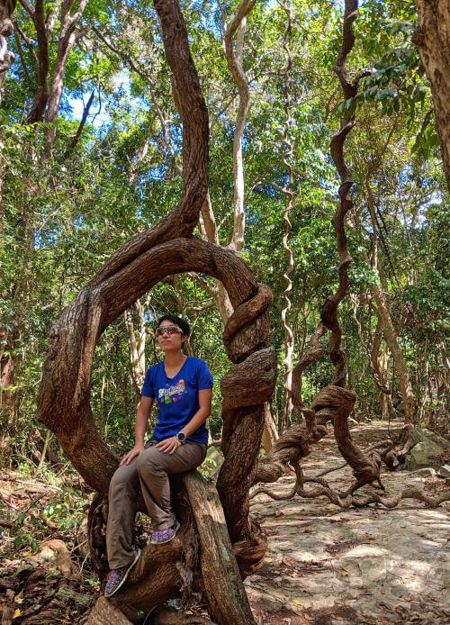 Con Dao National Park in Con Dao, Vietnam has many interesting twisted tree branches and trunks. We recommend walking through the National Park to uncover these unique trees where you can sit and take photos with them