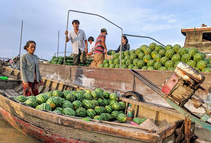 Along the Mekong Delta, there is the Cai Rang Floating Market where buyers and sellers have daily transactions of fruits and produce. In this photo, we have a boat full of fresh watermelons.