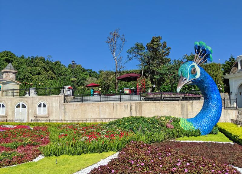 Sun World Ba Na Hills has 9 different gardens to explore. One of the gardens has a giant peacock's head with flowers used as the rest of its body.