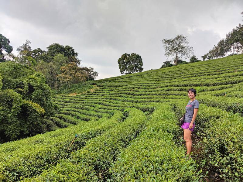 Jackie standing in the middle of a tea plantation in Bao Loc, Vietnam.