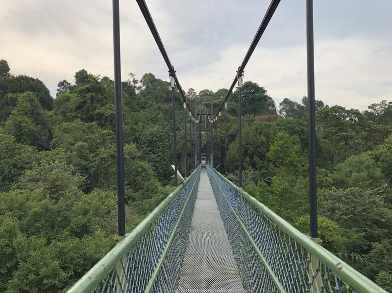View of the TreeTop Walk suspension bridge at the Central Catchment Nature Reserve/MacRitchie Reservoir. It's a fun place to visit during your four days in Singapore.