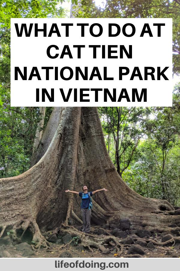 A woman with her arms open and looking up at the tall tree in Cat Tien National Park in Vietnam