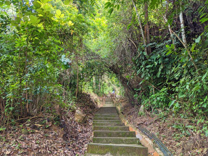 We're starting the hike up Penang Hill with a steep staircase in the forest area.