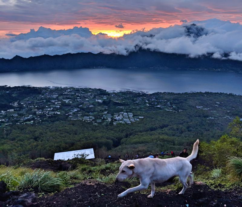 Waiting for the sunrise on top of Mount Batur with a white dog passing by. Learn more about the Mount Batur sunrise trek on our blog.