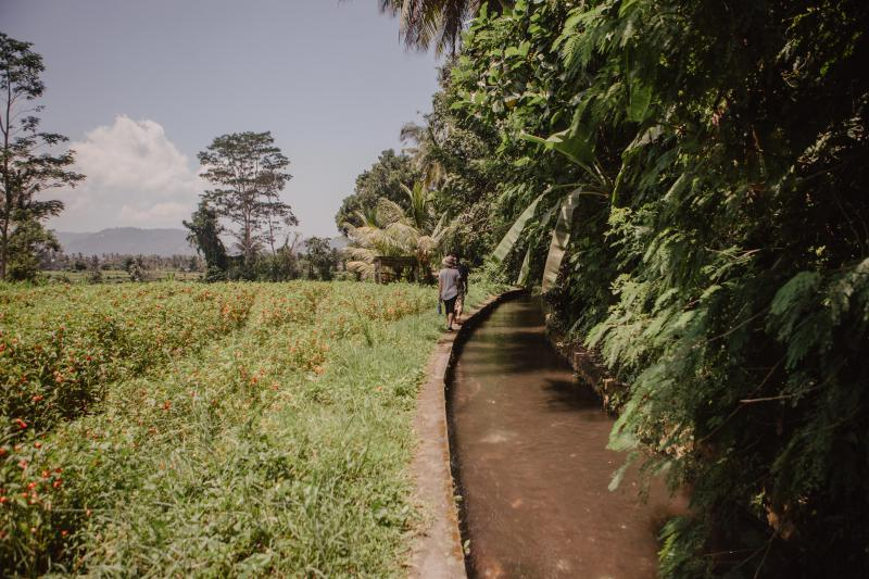 Two people walking along the green fields and a water stream while heading to the Secret Waterfall in Bali, Indonesia. Check out this post to learn more about the best waterfalls in Bali.