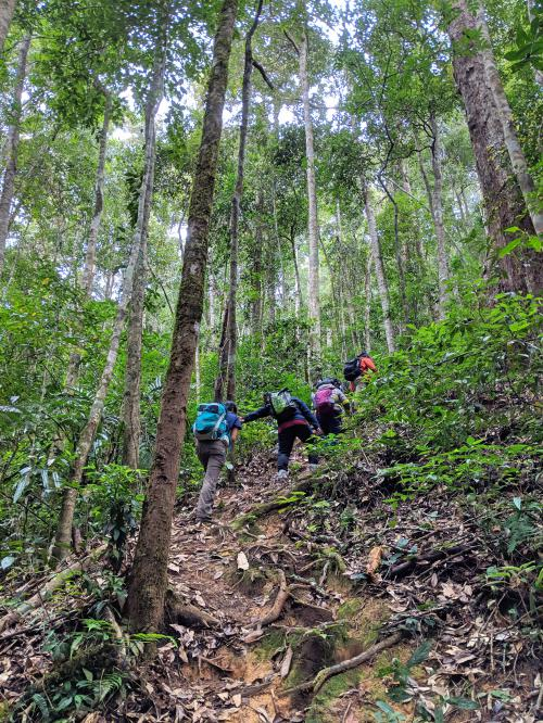 Four hikers trekking up the Bidoup Nui Ba National Park forest area.