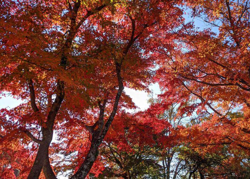 Visiting Mount Takao during the fall time has breathtaking fall leaves