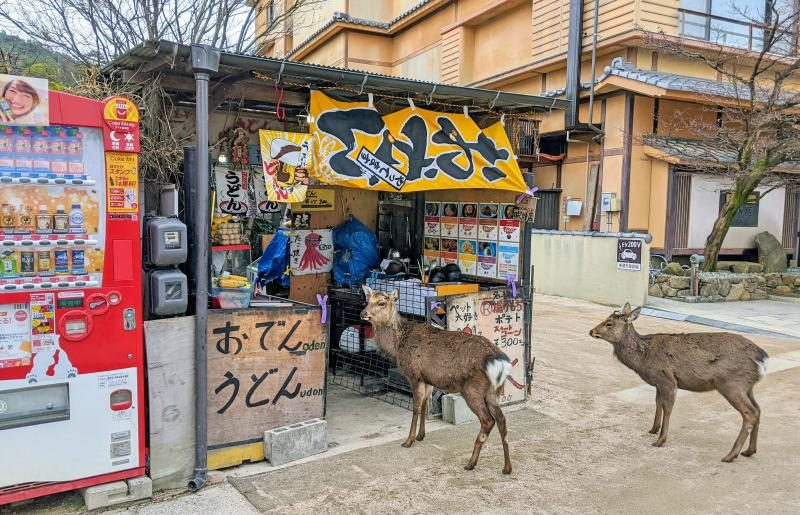 When visiting Miyajima, Japan in one day, you'll see deer everywhere. Two deer waiting in line for oden and udon.