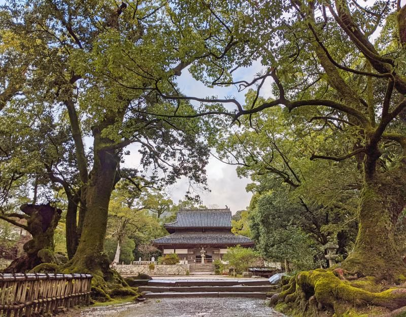 View of Kanzeonji Temple with the moss on the tree trunks in Dazaifu, Japan.