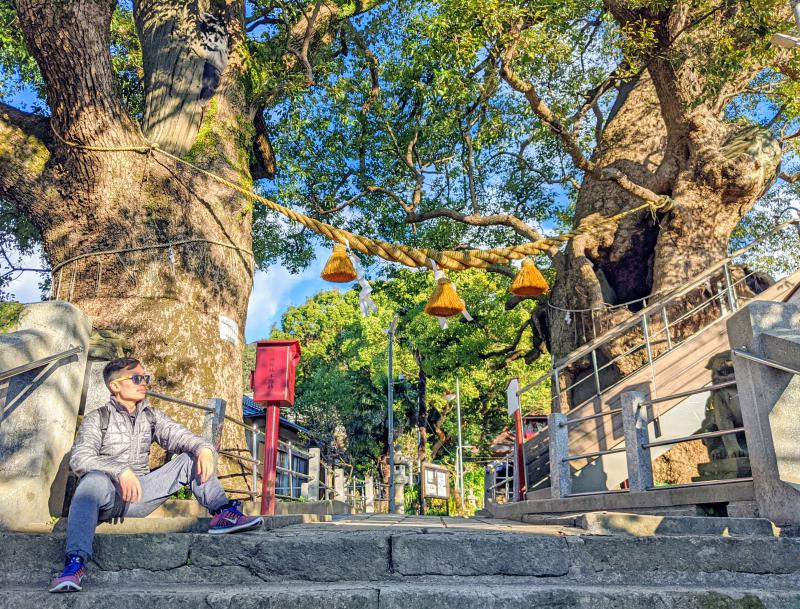 Justin Huynh, from Life Of Doing, checks out the camphor trees at the Sanno Shrine, which is a top attraction to visit on your one day in Nagasaki, Japan