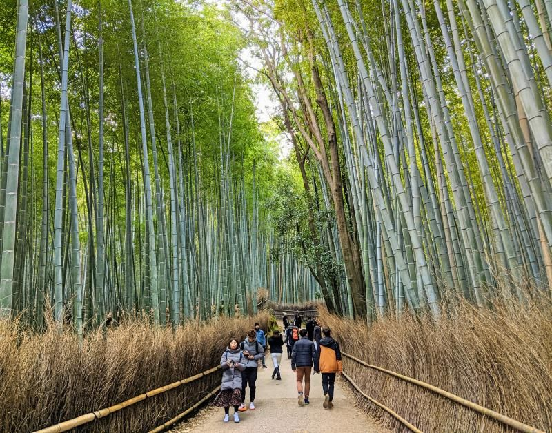 Visitors walk through the Arashiyama Bamboo Forest, a popular spot to visit in Kyoto, Japan.