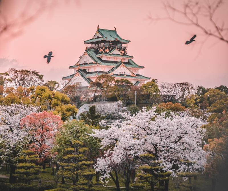 During springtime, the Osaka Castle is surrounded by cherry blossom trees and is gorgeous during the sunset with the pink skies.