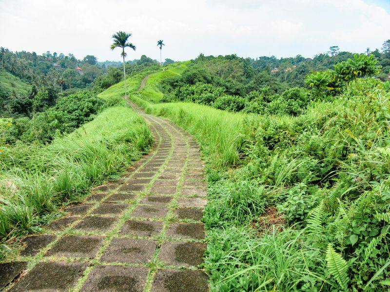Greenery and palm trees surround the Campuhan Ridge walkway in Bali's Ubud area