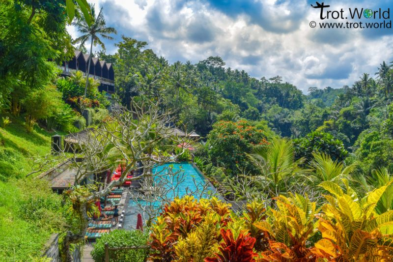 Jungle Fish Pool Bar in Ubud area has an infinity pool and is surrounded by palm trees and greenery.