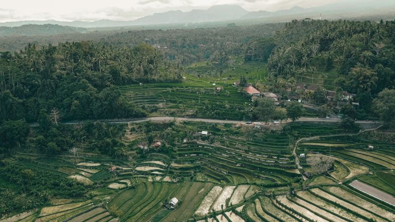 Overview of the rice paddy terraces in Sideman area of Bali