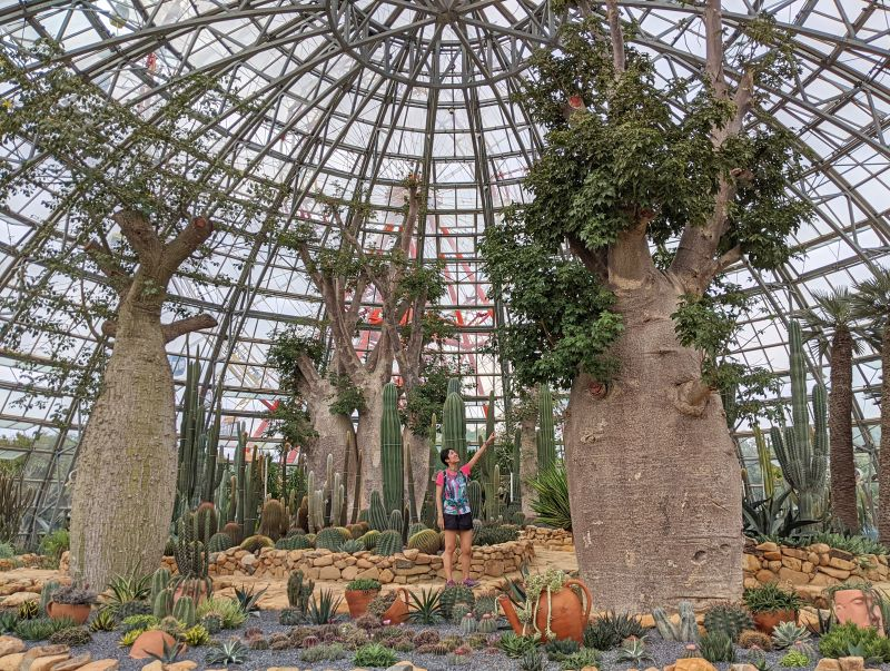Jackie Szeto, Life Of Doing, stands next to the baobab tree in World Garden area of VinWonders Nha Trang Theme Park, Vietnam