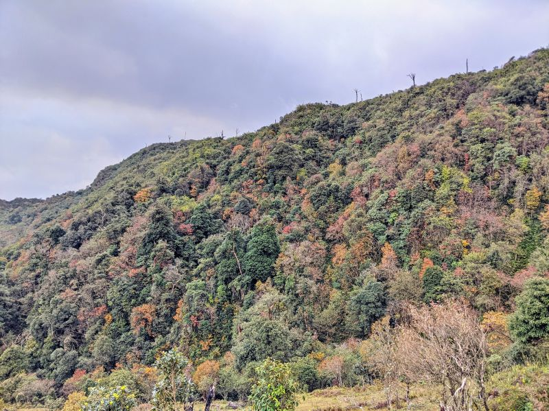 Autumn colors for the trees on Mount Fansipan in Sapa, Vietnam