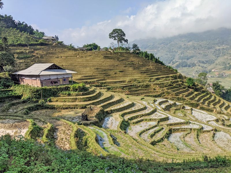 Afternoon sun shines on the rice terraces in Sapa, Vietnam