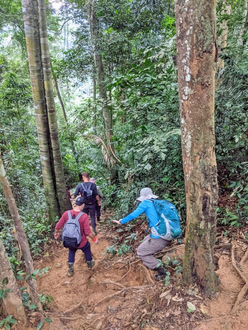 Group of hikers climb down the muddy hill to go to Hang En Cave in Phong Nha, Vietnam