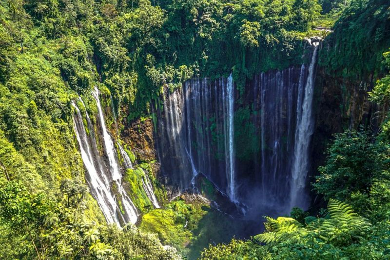 Tumpak Sewu Waterfall surrounded by green trees and plants