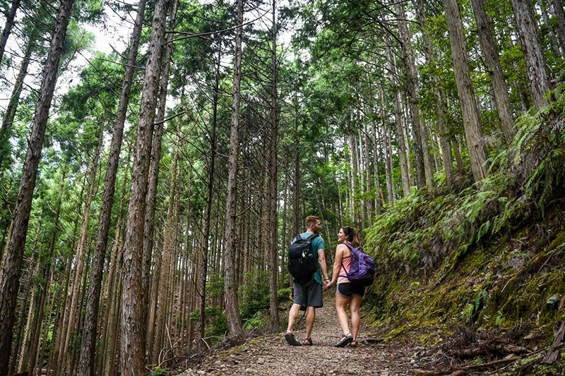 Ben and Katie from Two Wandering Soles hold hands while hiking through the forest area of Kumano Kodo Pilgrimage Trail in Japan