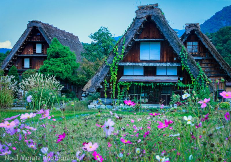 Slanted roofs made from grass cover the wooden houses in Shirakawa-go, Japan