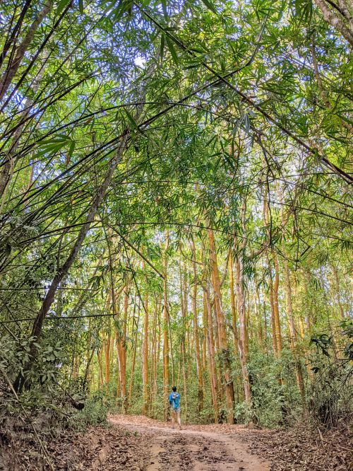 Jackie Szeto, Life Of Doing, walks along the bamboo forest in Nui Dinh Mountain, Vietnam