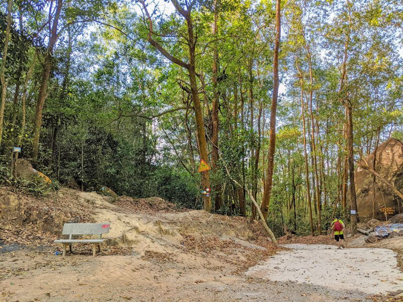 A bench and forest area that leads to the summit of Nui Dinh Mountain