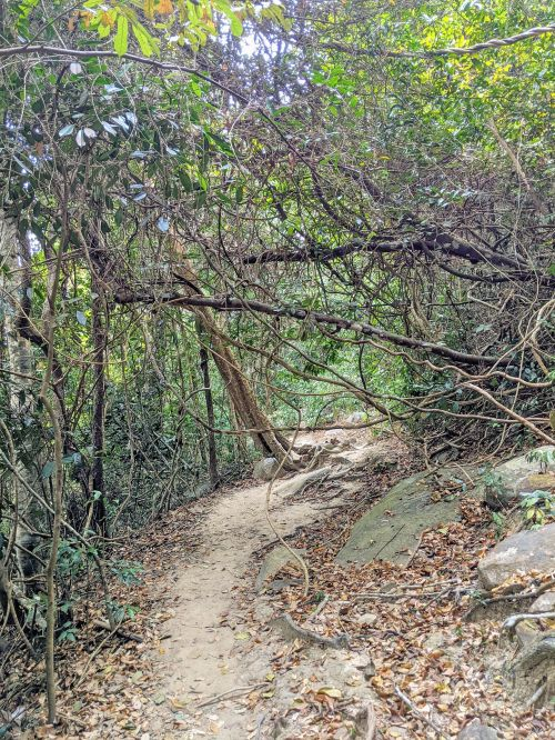 Dirt hiking path with twisted tree branches on Ta Cu Mountain, Vietnam
